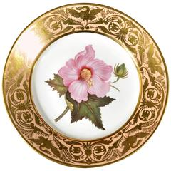 Antique Derby Porcelain Salmon Ground Plate, Marsh Hibiscus, by John Brewer