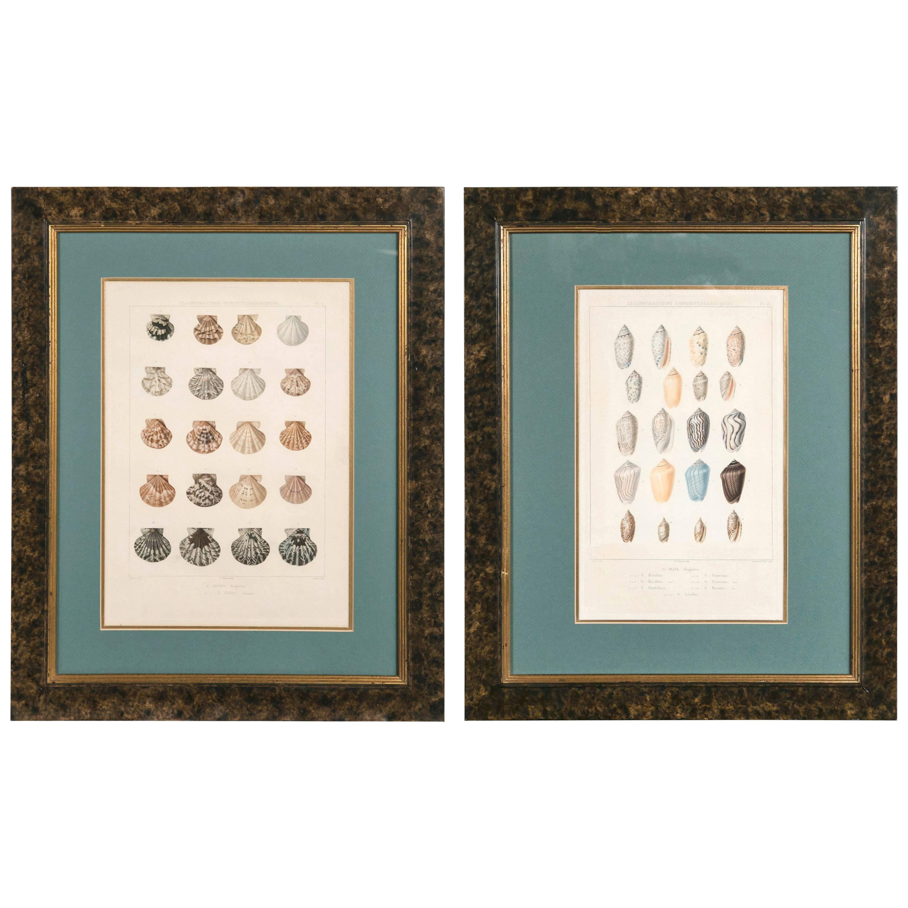 Pair Framed Hand-Colored Engravings of Sea Shells, France, circa 1850
