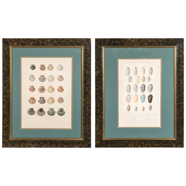 Pair Framed Hand-Colored Engravings of Sea Shells, France, circa 1850 For Sale