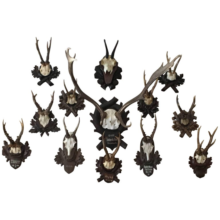 Collection of Black Forrest Mounts Including One Stag, Ten Roe and One Chinois 1
