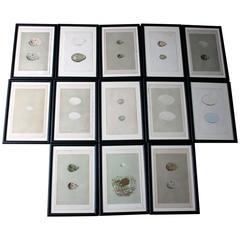 Group of 13 Lithograph/Woodblocks of British Birds' Eggs, circa 1842-1856
