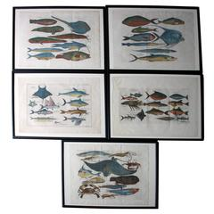 """Hand-Colored Copper Plates of Fish from """"a Collection of Voyages and Travels"""""""