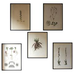 Five Regency Period Framed and Hand-Coloured Stipple Botanical Engravings
