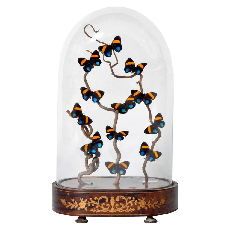 Decorative Cloche With Butterfly Display