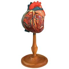 1940s Plaster Anatomical Heart Model on Wood Stand