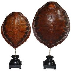 Pair of 20th Century Sea Turtle Shells Shields on Stand