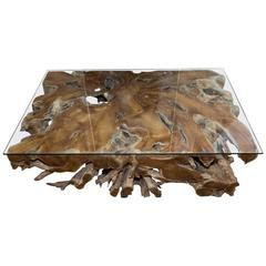 Fabulous Huge Natural Root Cocktail Table with Glass Top