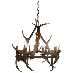 Very Large 19th Century Black Forrest Stag Antler Hanging Chandelier