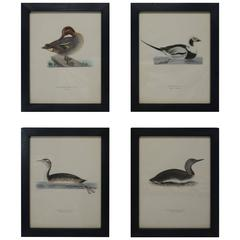 Swedish Waterfowl Prints, circa 1929