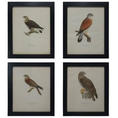 Swedish Birds of Prey Prints, circa 1929