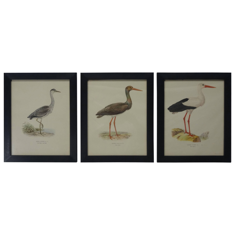 Swedish Waterfowl Prints, circa 1929