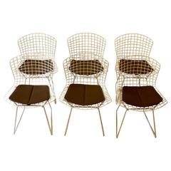 Set of six 1960s Harry Bertoia Side Chairs for Knoll with Original Seat Pads
