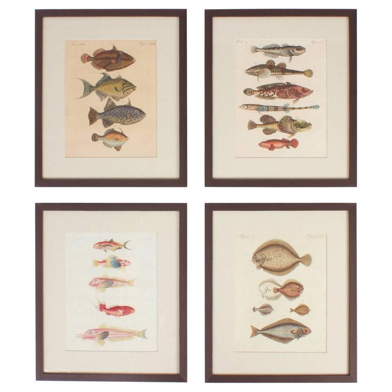 Set of Four Tropical Fish Engravings