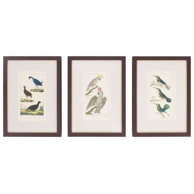 Rare Set of French Hand Colored Bird Engravings