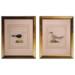 Pair of Late 19th Century Ornithological Prints by W. v. Wright
