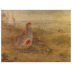 "James Stinton (British 1870-1961) ""Grey Partridge"" Watercolor"
