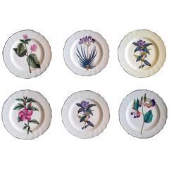 English Pottery Set of Six Botanical Plates