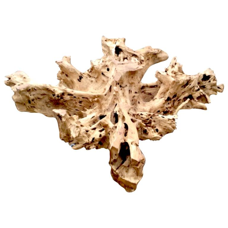 Teak Root Coffee Table Base For Sale at 1stdibs