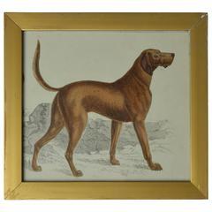 Original Antique Print of an English Sporting Dog, circa 1850