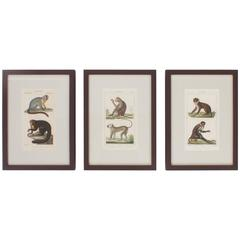 Rare Set of Three 18th Century Hand Colored Monkey Engravings