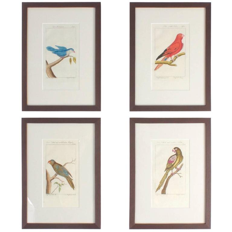 Charming Set of Four Antique Hand-Colored Bird Engravings