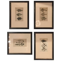 Collection of Four Wood Block Prints of Fish, 19th Century