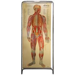 Medical Anatomy Chart Titled 'Thin Man'