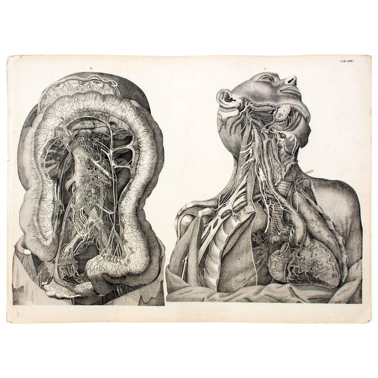 Vintage Anatomical School, Teaching Chart, M.J. Weber, 1830