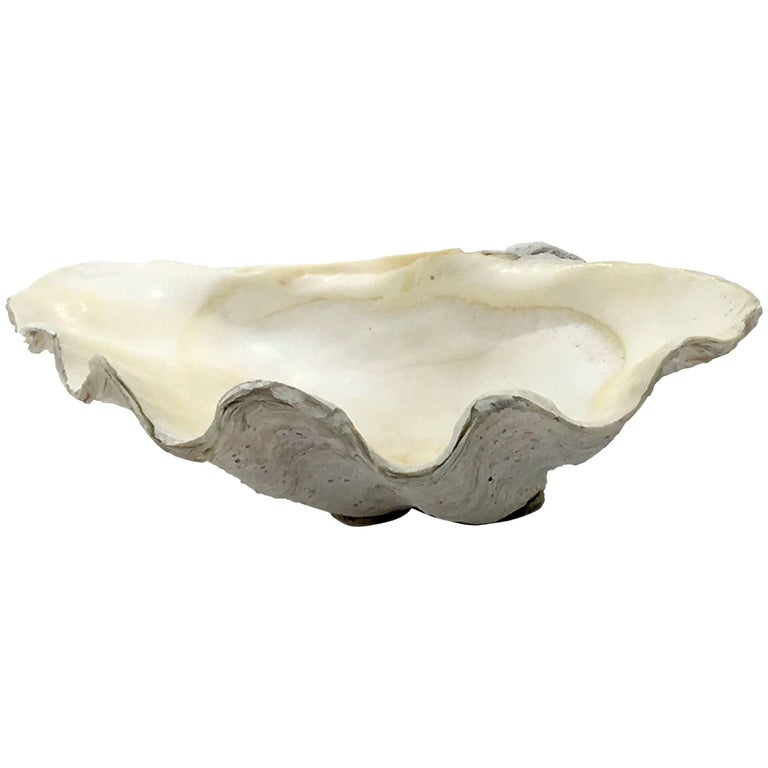 Beautiful Natural Patina, Clam Shell, Vide Poche, Bowl For Sale