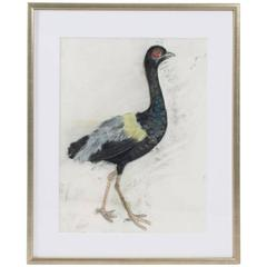 Pastel on Paper of a Grey-Winged Trumpeter Bird, Marianne Stikas