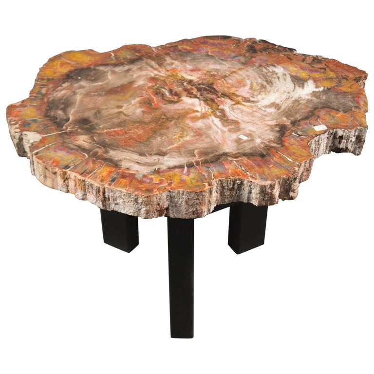 Petrified Wood Coffee Table Belgium Circa 1970s For Sale At 1stdibs