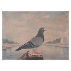 19th Century French Painting of a Racing Pigeon