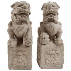 Pair of Chinese Courtyard Shizi
