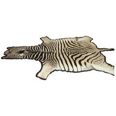 African Burchell Zebra