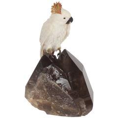 Amusing Carved Hardstone Quartz Cockatoo