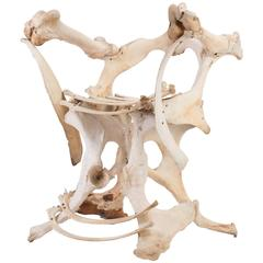 Bone Chair, Second Half of the 20th Century