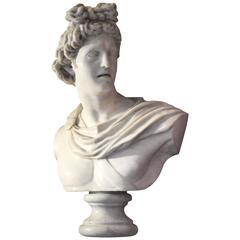 Italian Carrara Marble Bust of Apollo