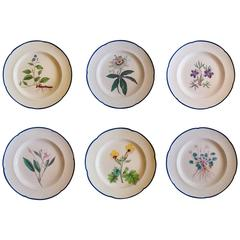 English Botanical Pearl Ware Pottery Painted Named Specimen Plates, Wm. Curtis