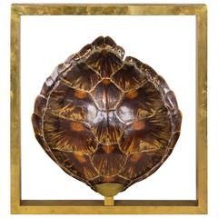 Big and Unique Turtle Shell Sconce, circa 1970, Italy