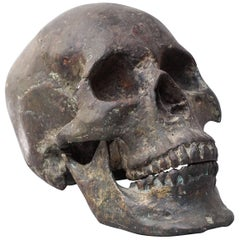 Bronze Cast of a Human Skull