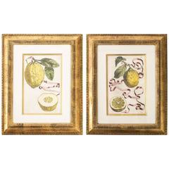 Framed Botanical Prints