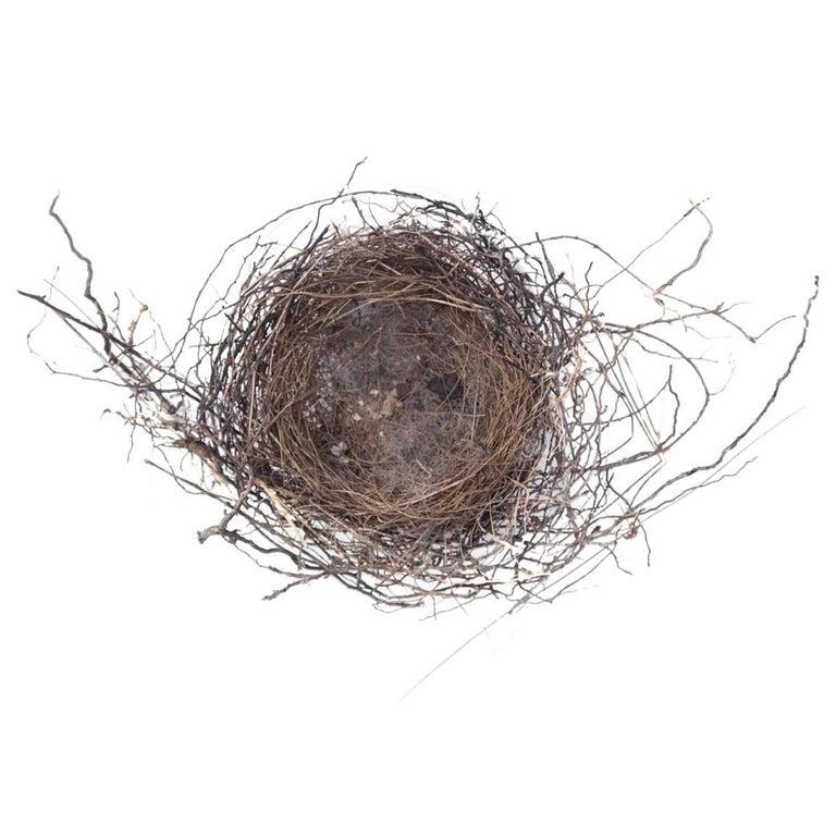 """""""Nest #1750"""" by Francine Fleischer For Sale"""