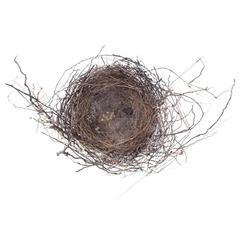 """""""Nest #1750"""" by Francine Fleischer"""