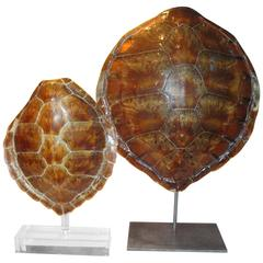 Pair of Antique Sea Turtles on Stands