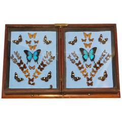 Framed Presentation Collection of Butterflies