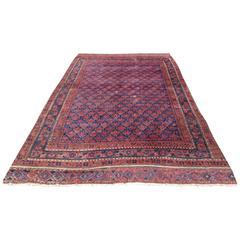 Antique Timuri Baluch Main Carpet with All over Shrub Design, 19th Century