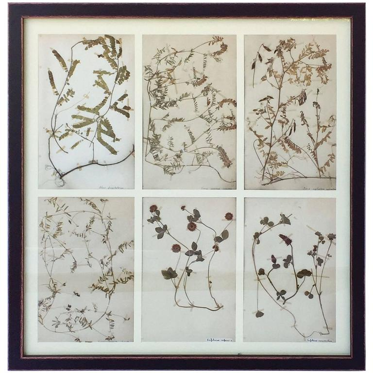 Swedish Herbal Pressed Botanical Framed under Glass, circa 1940 1