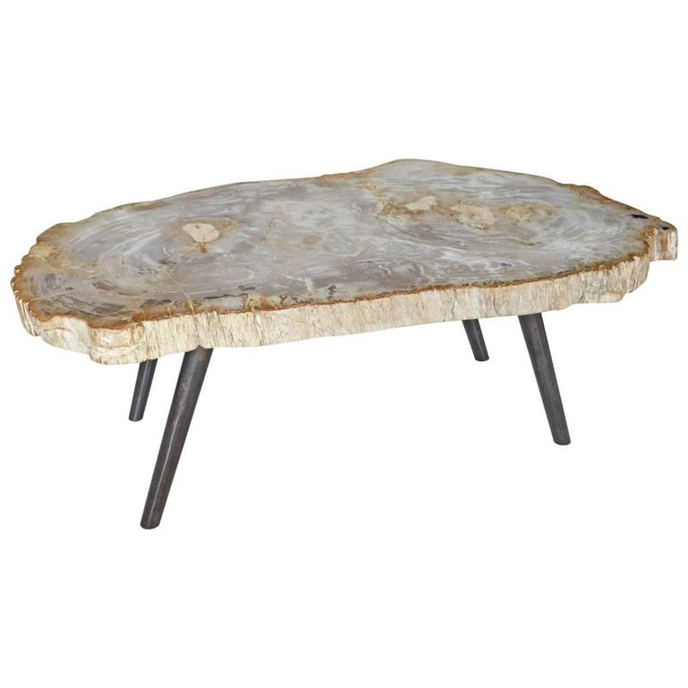 Andrianna Shamaris Petrified Wood Coffee Table For Sale At 1stdibs