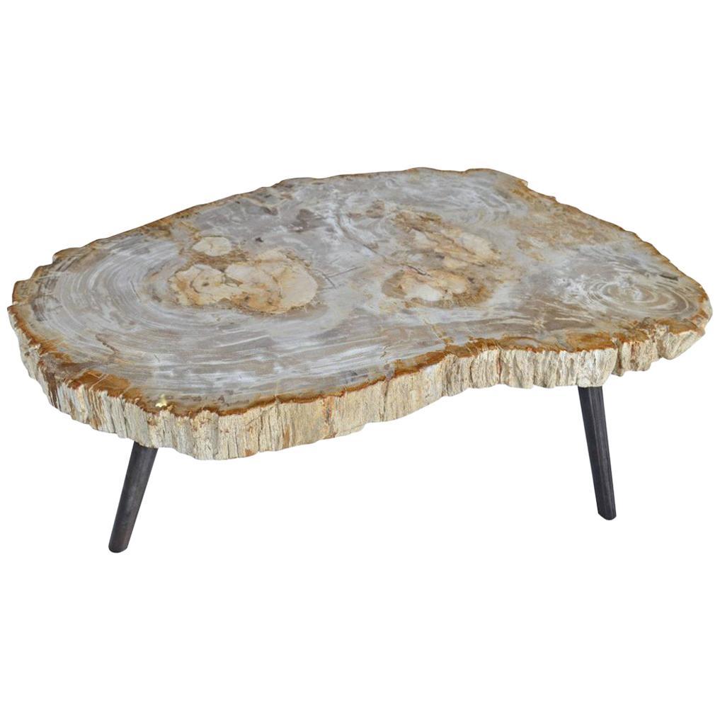 Andrianna Shamaris Light Toned Petrified Wood Coffee Table
