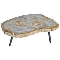 Andrianna Shamaris Light Toned Petrified Wood Coffee Table